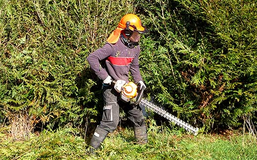 Cutting the overgrown and neglected hedge