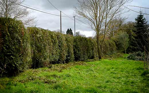 Another hedge nearly done!